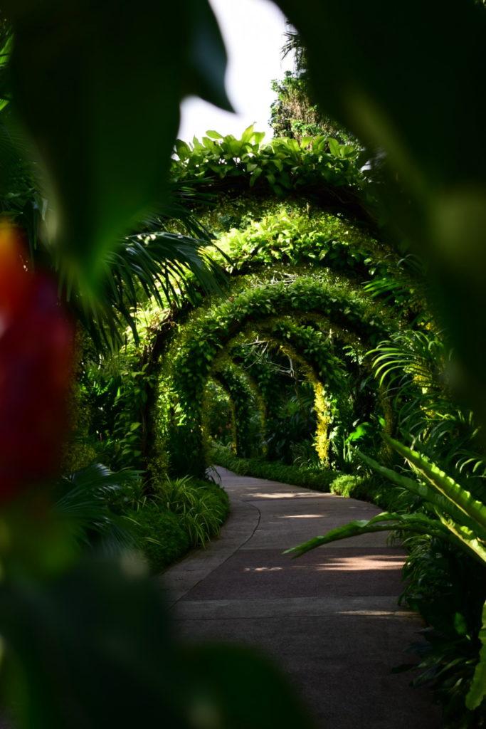 Ein Pflanzenspalier in den Botanischen Gärten in Singapur