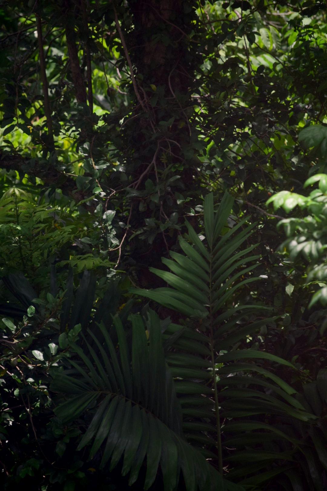 tropische Pflanze in Singapur