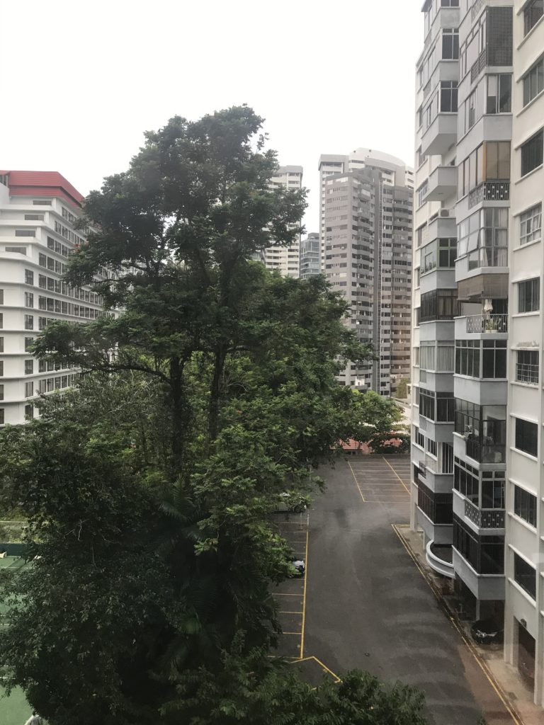 The view out of my quarantine room towards a tree and some apartment houses.