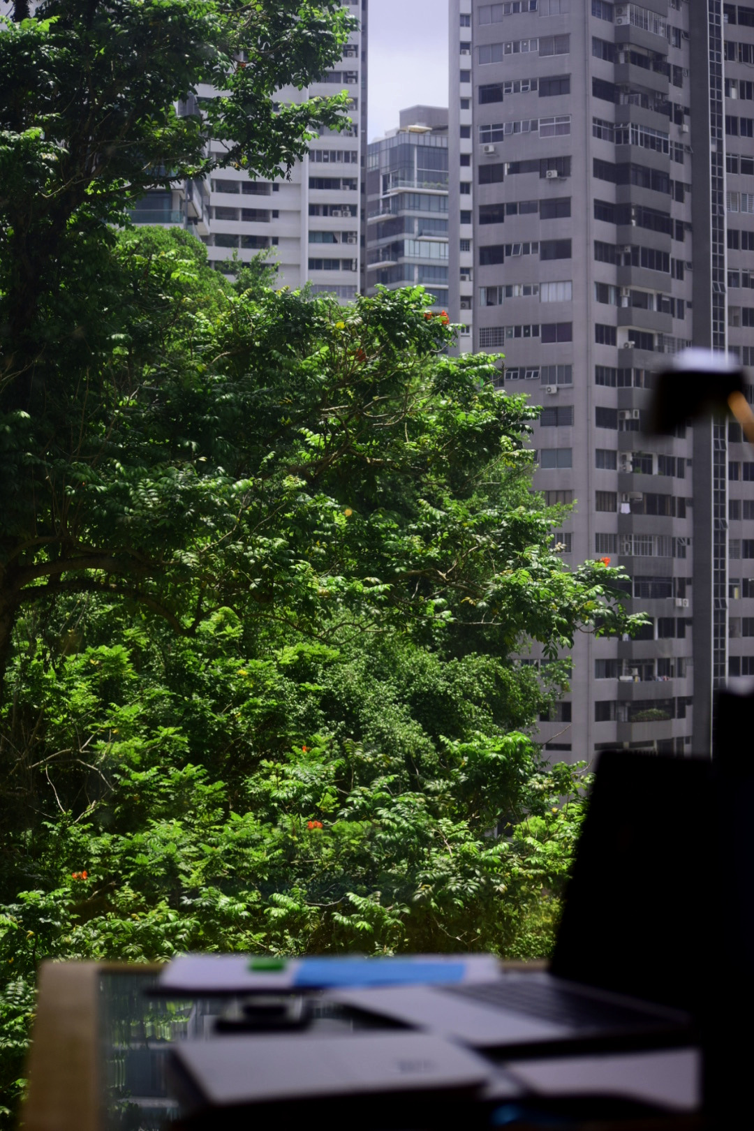 Die Aussicht aus meinem Quarantäne-Hotelzimmer Richtung Natur und Wohnblöcken.